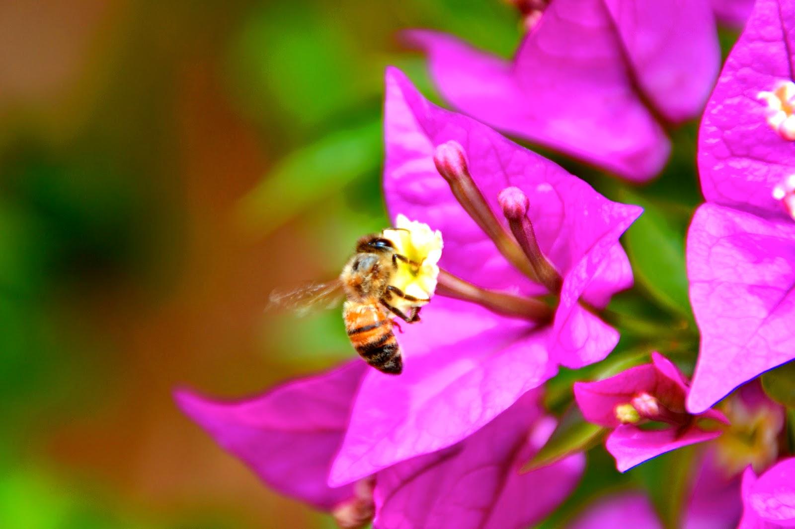 polline 2
